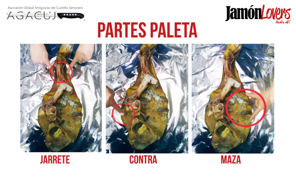 El corte de la paleta: Partes paletilla