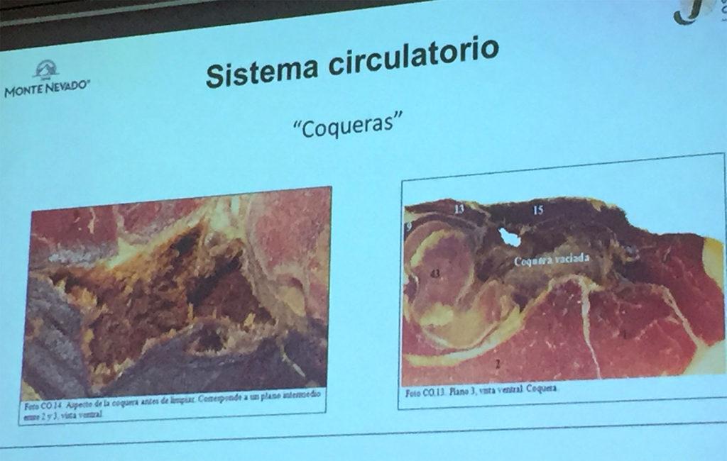 Coqueras. Anomalías del jamón, implicaciones del sistema linfático, vascular y óseo, por Juan Vicente Olmos en el Congreso Mundial del Jamón
