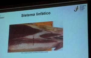 Ganglios poplíteos. Anomalías del jamón, implicaciones del sistema linfático, vascular y óseo, por Juan Vicente Olmos en el Congreso Mundial del Jamón