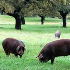 Los productores de jamón castellano leoneses recurrirán la norma del Jamón Ibérico