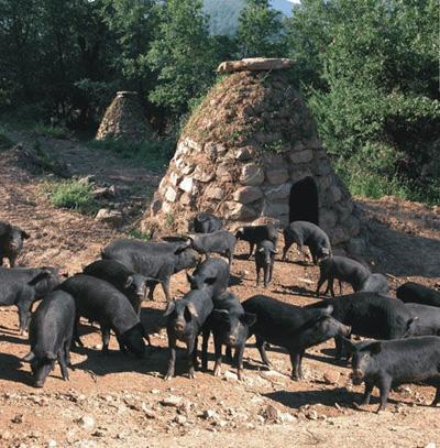 Cerdo negro siciliano