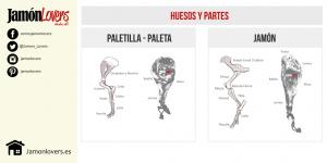 Diferencias entre jamón y paletilla, huesos y partes