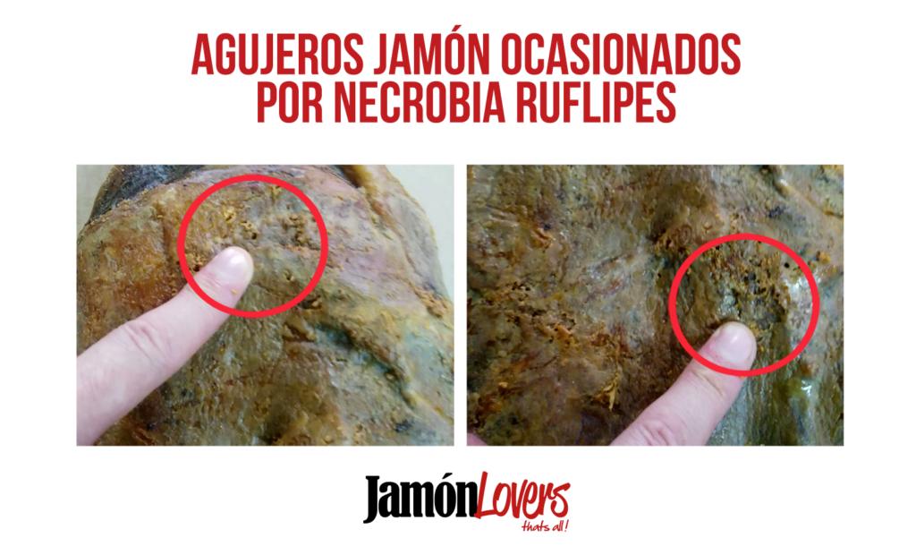 Necrobia Rufipes agujeros larvas jamón
