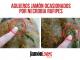 Necrobia Rufipes, bichos jamón, agujeros larvas