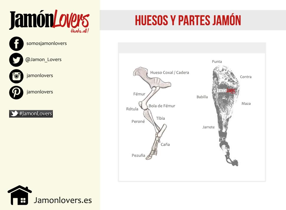Partes jamón, huesos, morfología jamón