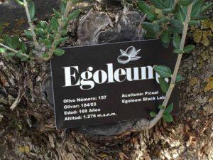 Chapa de identificación para los olivos de Egoleum