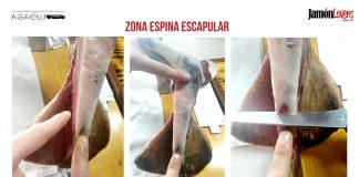 Cómo cortar una paletilla: Zona espina escapular, el corte de la paleta