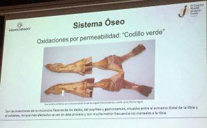 Codillo verde. Anomalías del jamón, implicaciones del sistema linfático, vascular y óseo, por Juan Vicente Olmos en el Congreso Mundial del Jamón