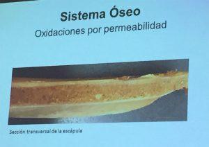Oxidaciones por permeabilidad. Anomalías del jamón, implicaciones del sistema linfático, vascular y óseo, por Juan Vicente Olmos en el Congreso Mundial del Jamón