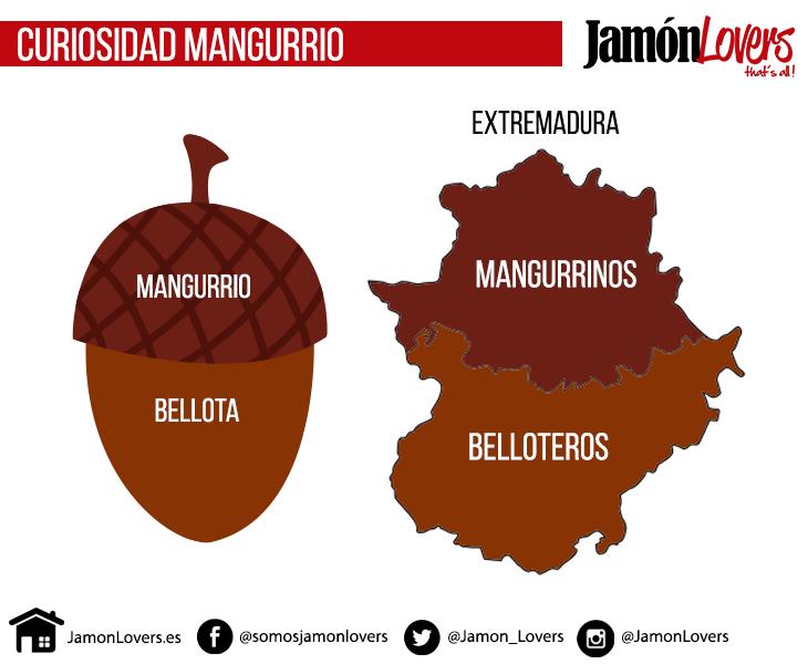 Curiosidad sobre mangurrinos y belloteros. La bellota y Extremadura.