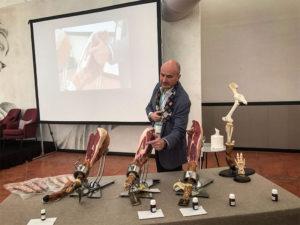 Aspectos anatómicos y de proceso de interés para el corte y degustación de jamón curado. Juan Vicente Olmos Llorente