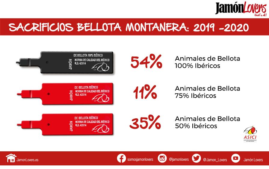 Sacrificios bellota 2019-2020 datos cerdos de bellota ibéricos